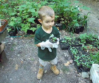 Small boy holding small plant