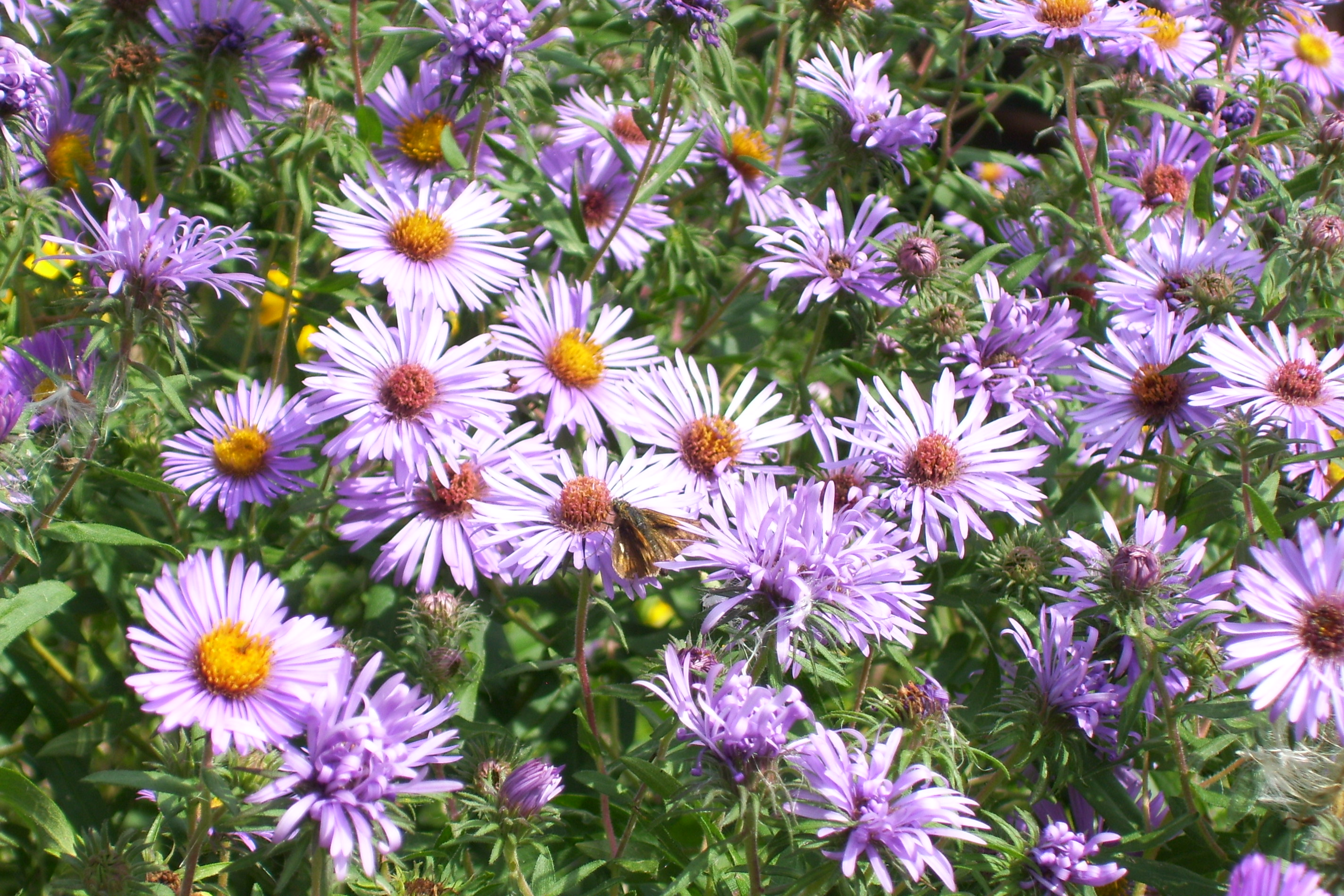 Sun or Pollinator Collection 1