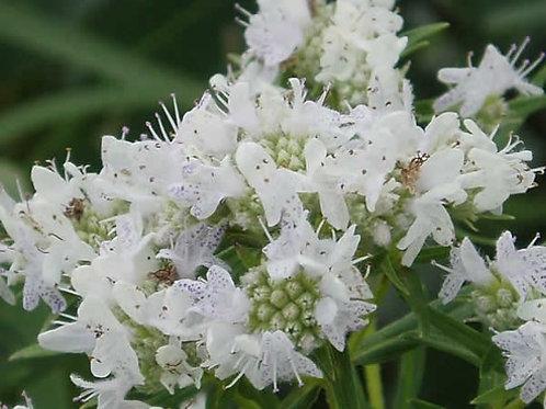 Sun Pollinator Garden Trial Collection PW 2021