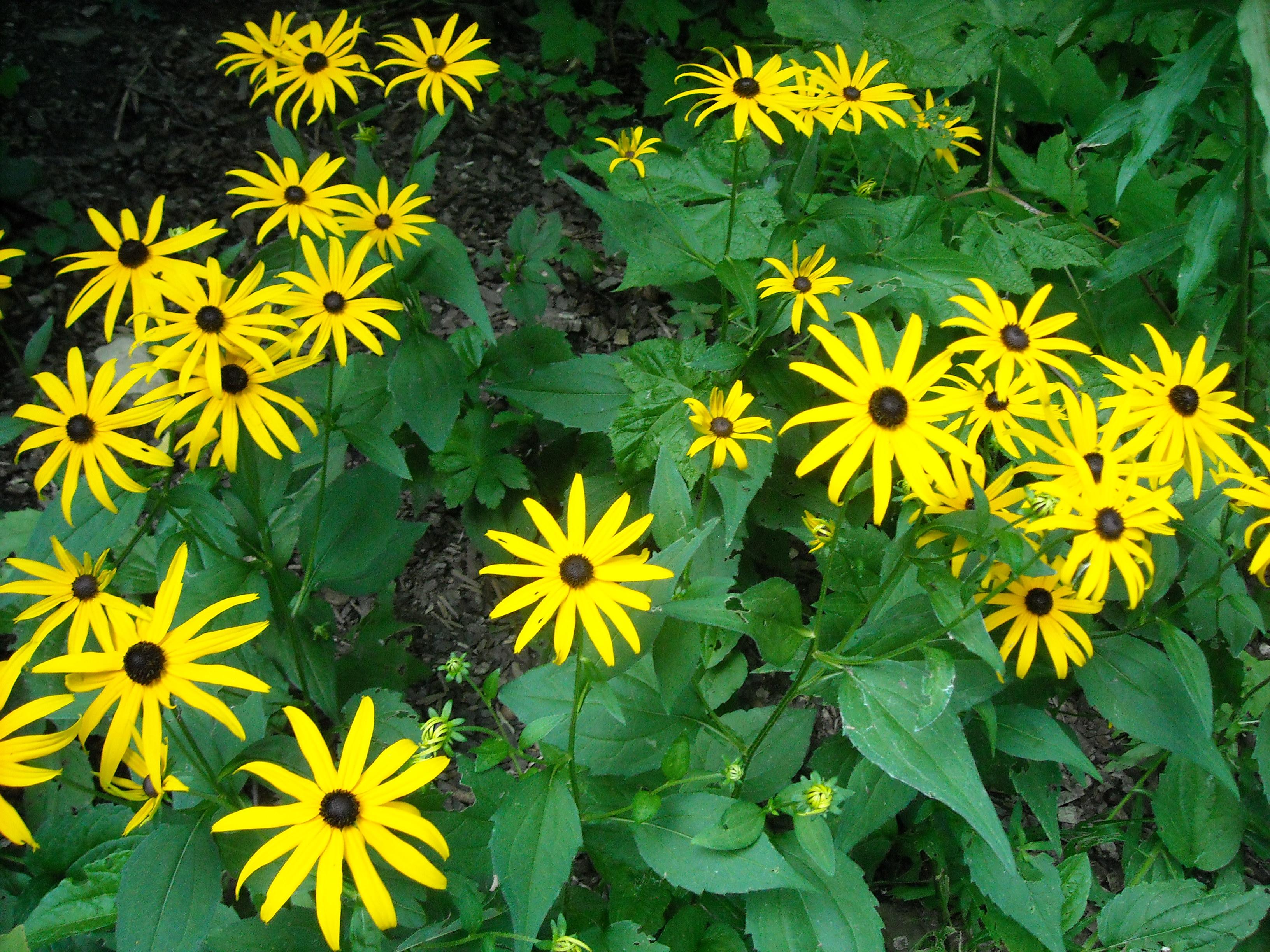 Spectacular Pollinator Garden