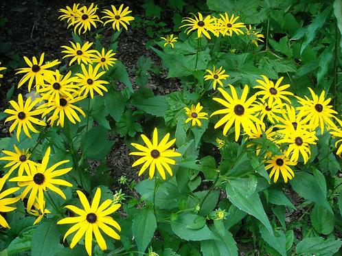 Spectacular Pollinator Garden for Sun