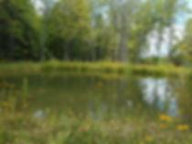 Amanda's Garden Pond