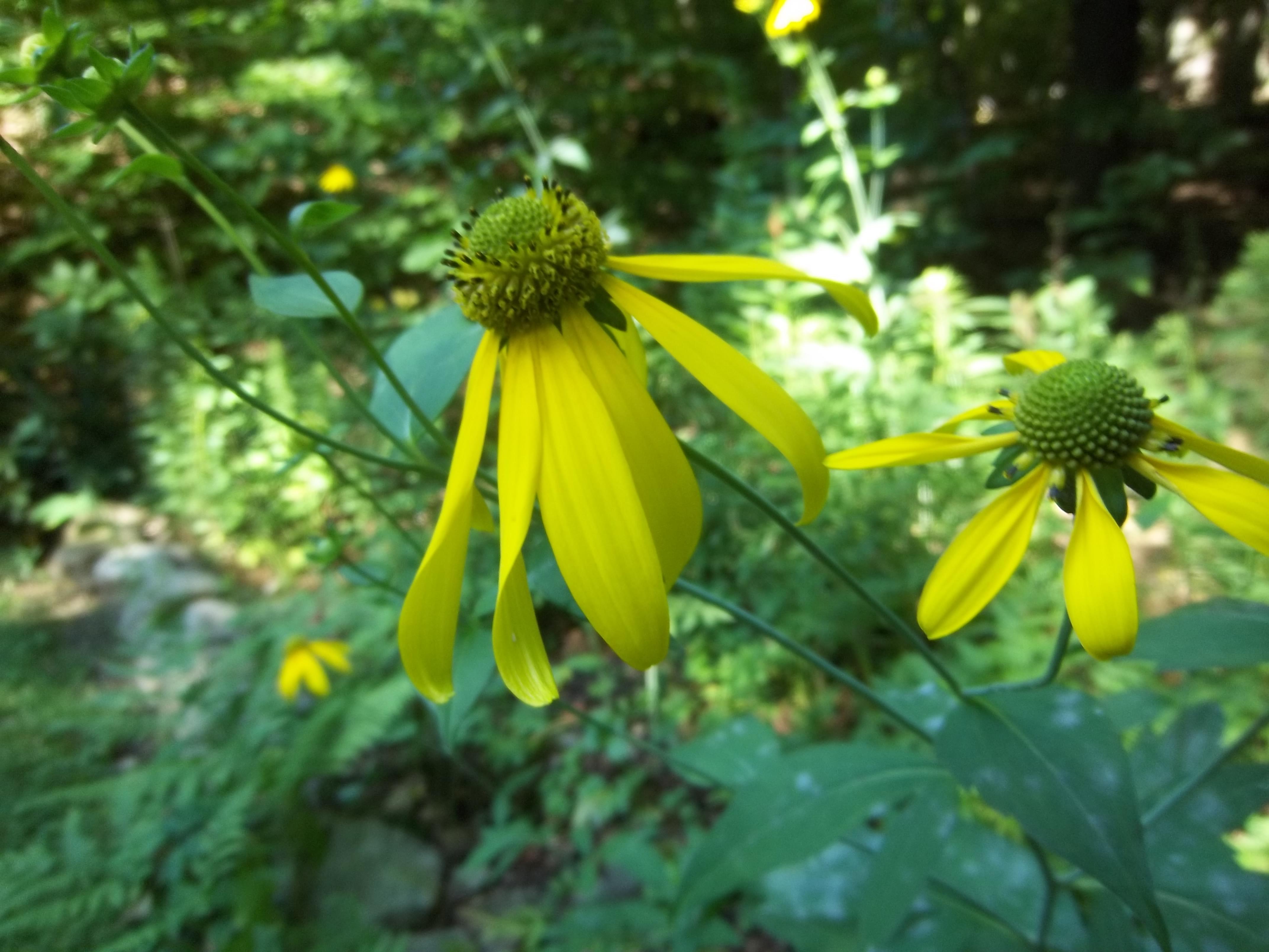 Amazing Pollinator Garden
