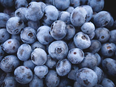 Hillsborough 100 U-Pick at Duggal & Sons Blueberry Farm in Lithia to benefit HSWCD youth programs