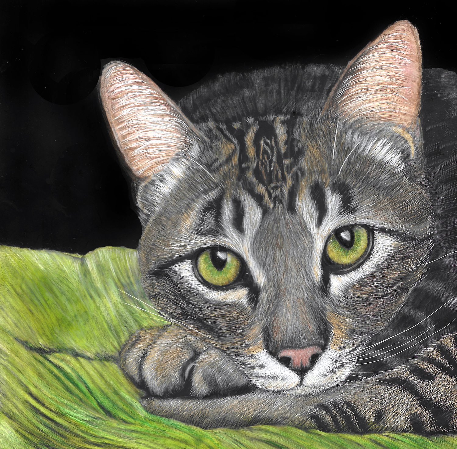 Tabby on Cushion in Scratchboard