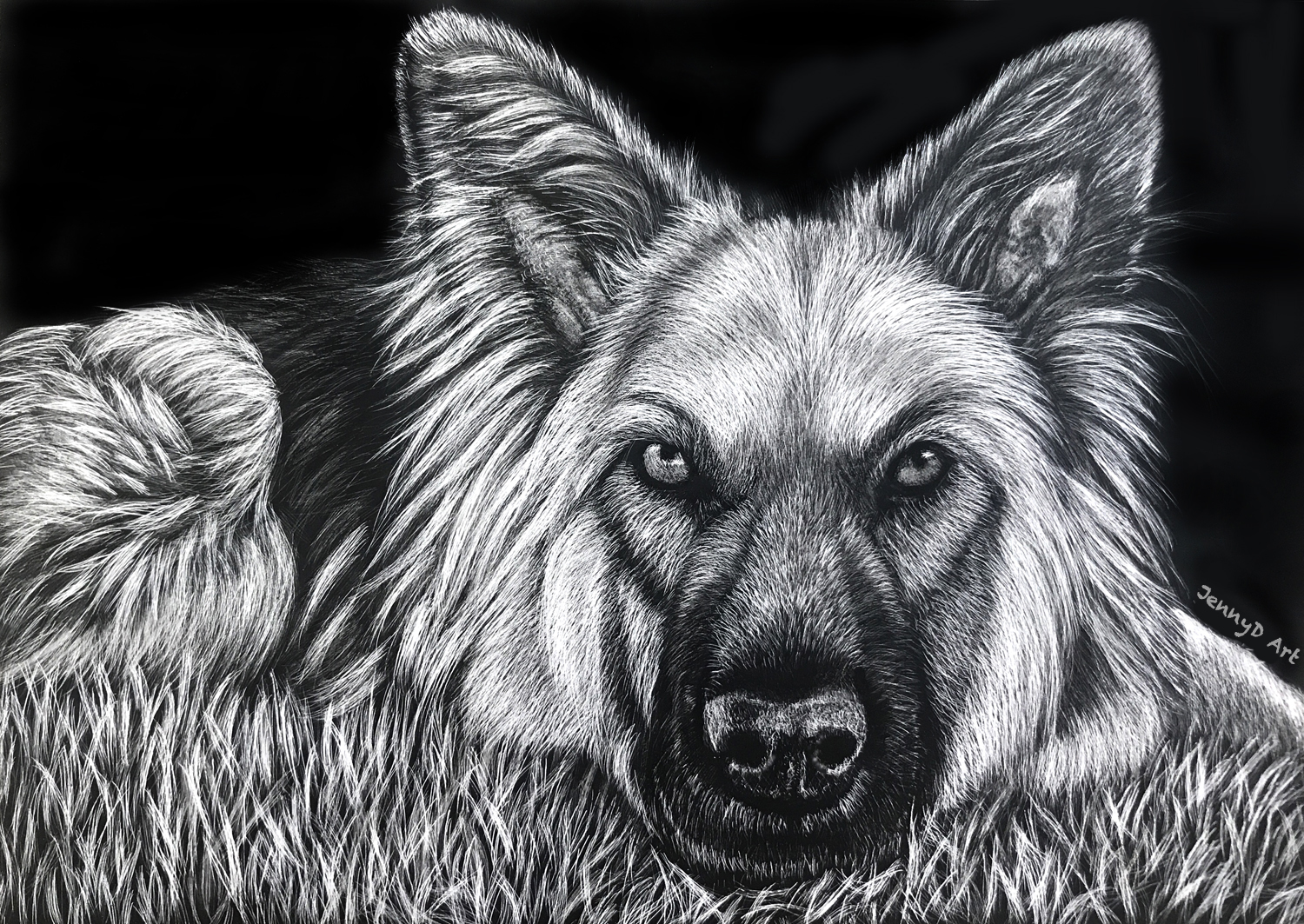 German Shepherd in Scratchboard