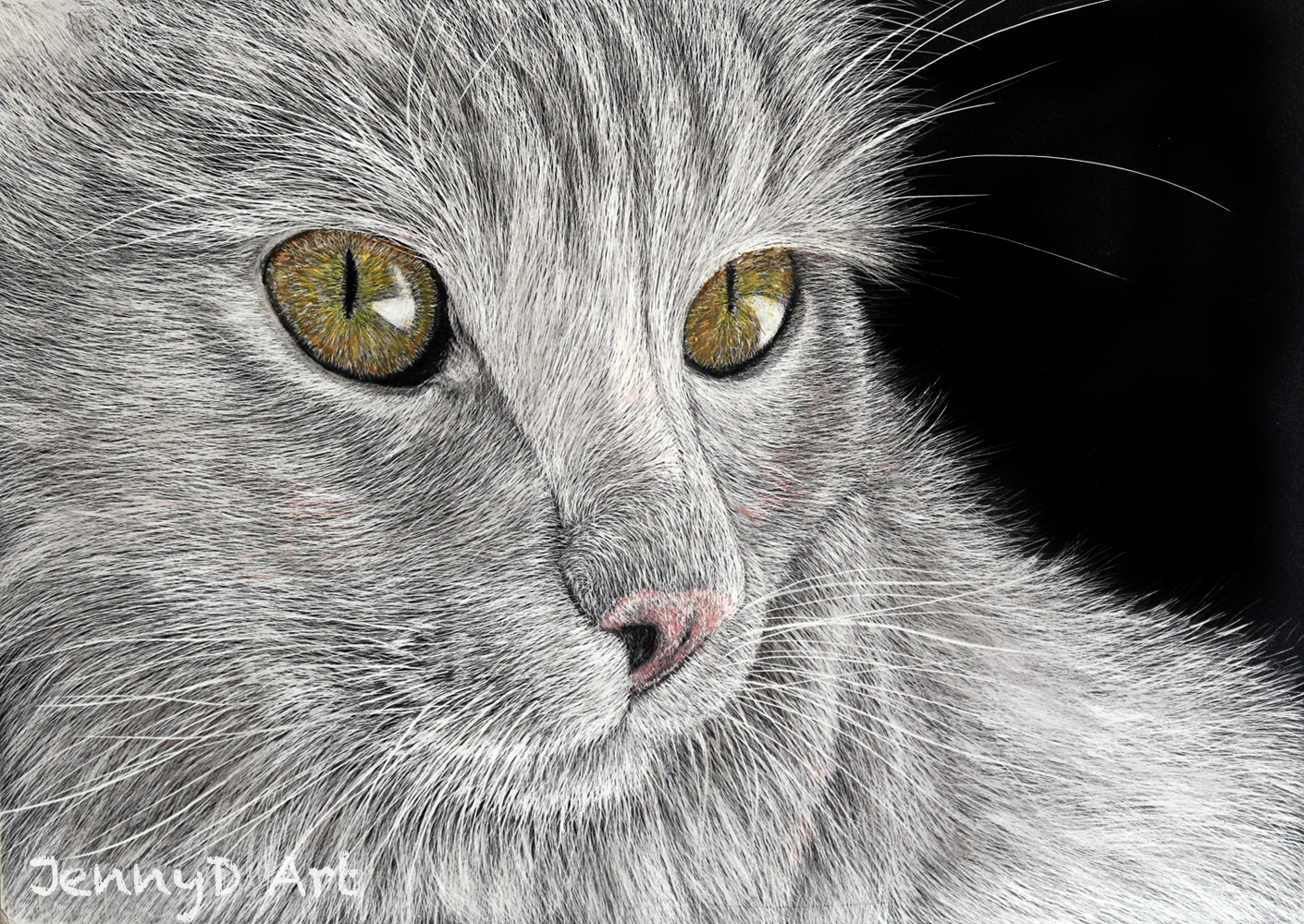 Persian Cat in scratchboard