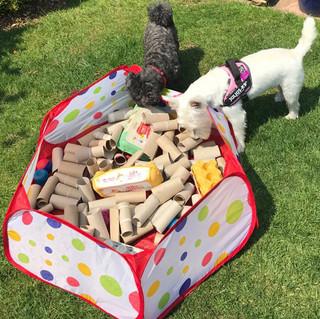Puppoy and dog training 3.jpg