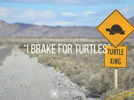 A Turtle Does Not Belong On A Freeway
