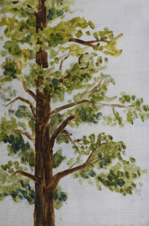 """Pine Study"""