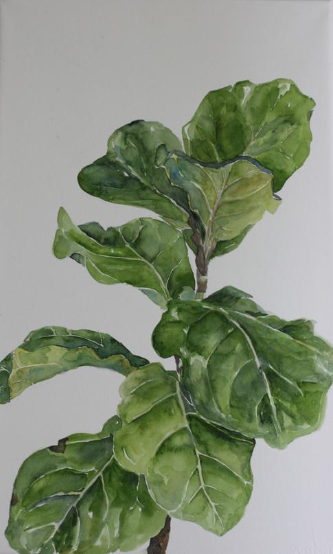 """""""Fiddle Leaf"""""""
