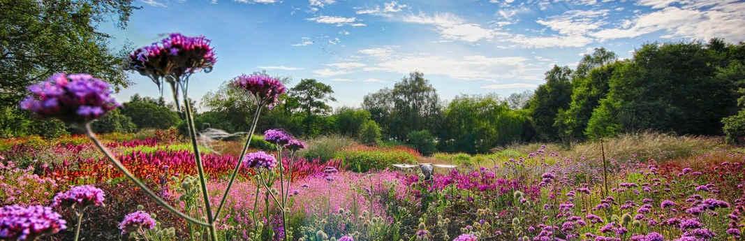 Millennium-Garden-in-full-bloom-at-Penst