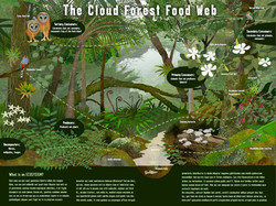 Cloud Forest Eco System