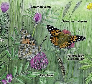 Royal Parks Madeleine Smith Illustrator