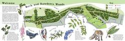 Birch & Rowdown Woods Map