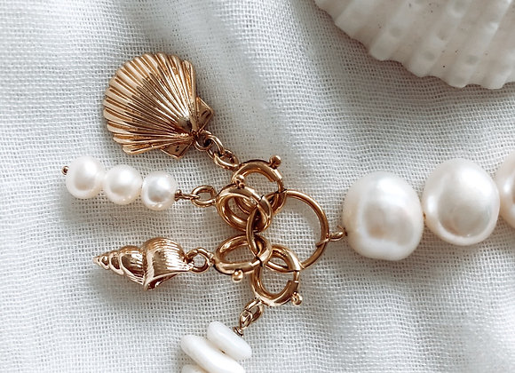 Charm's Coquillage