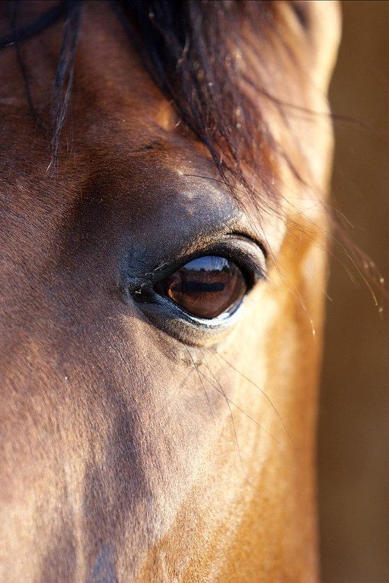 bay-horses-1392120.jpg
