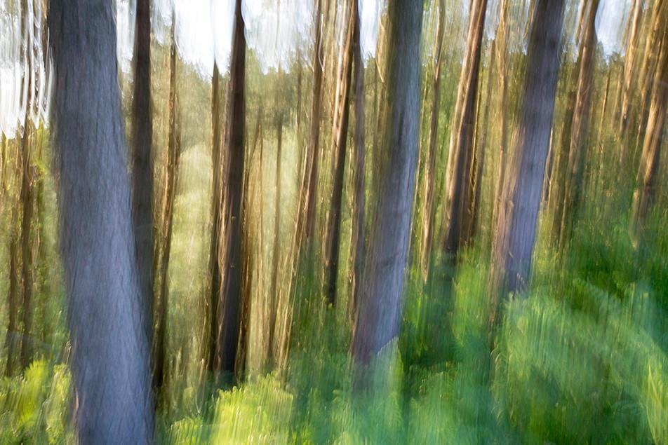 A take on Trees