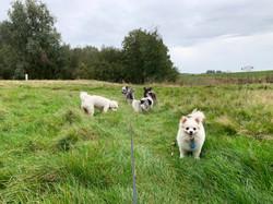 De 4 Toppers en Wolf
