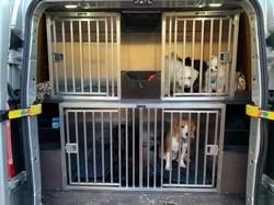 Hondjes in de kennels