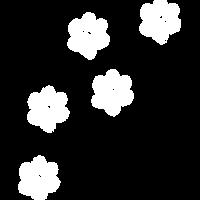 paw prints white.png