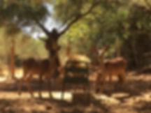 ciervos2.jpg