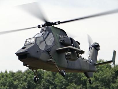 600-Tiger-14.jpg