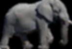 Elephant.tif