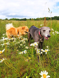 Molly and Hugo in the daises