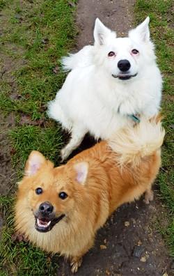 Hugo and Bolt