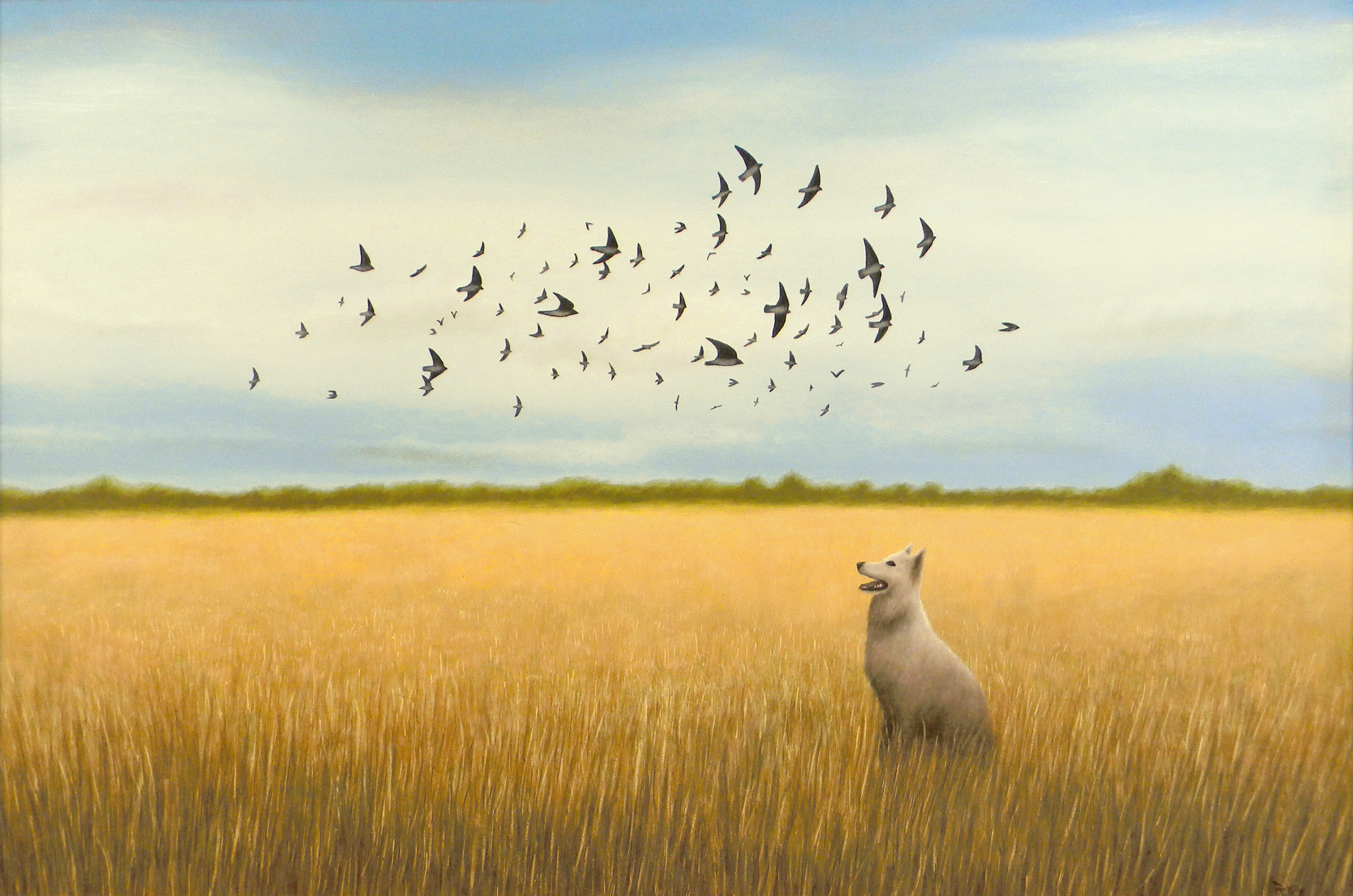 Dog With Flock of Swallows