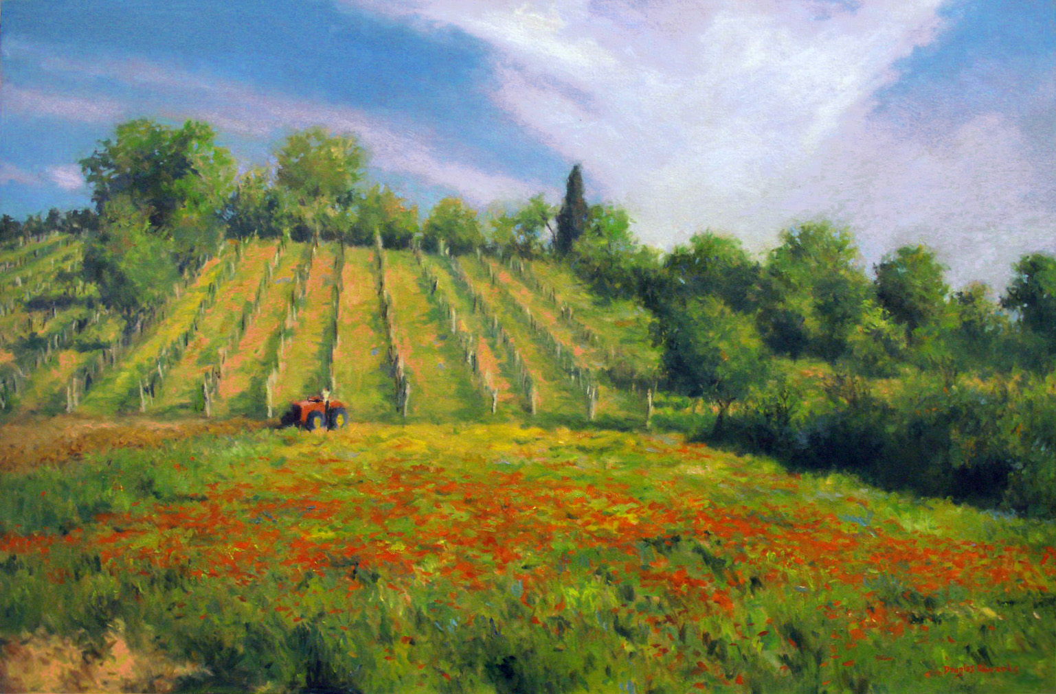 Vineyard and Poppies