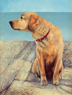 Dog and Island