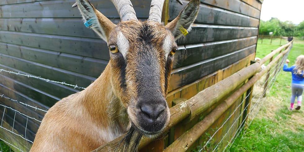 Club Run to Goat Centre Stoke Mandeville