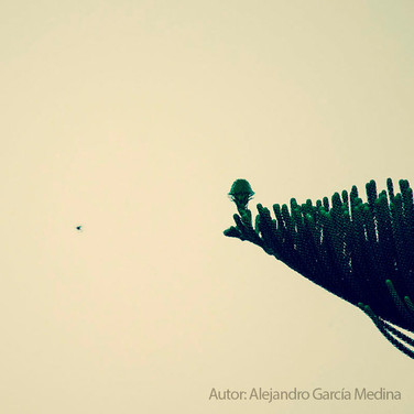 """Alejandro Medina García, """"Y sin lugar a donde ir, se quedó con la idea de que su respuesta iba a llegar adonde debía"""""""
