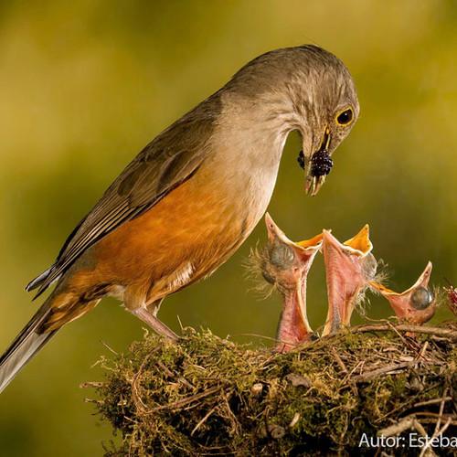 "Esteban Argerich, ""Feeding Babies"""