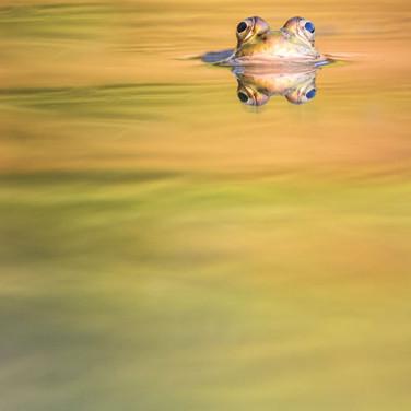 Lluc Semis Gasol, Los ojos de la naturaleza