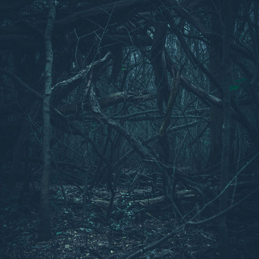 Nicolás Sasbón, del Album Dark mood_2.