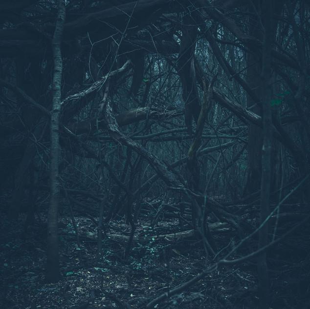 Nicolás Sasbón, del Album Dark mood 2