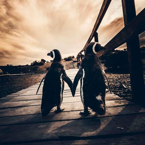 "Lucas Abrego, ""Pingüino"""