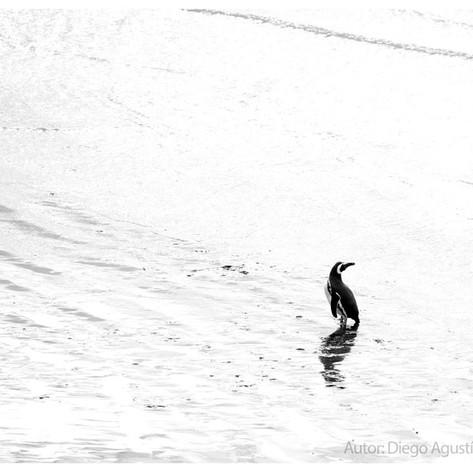 """Diego Agustín Cabanas, """"Lonely penguin"""""""