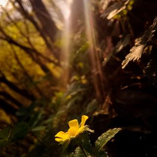 Nair Olás, Simplicidad amarilla