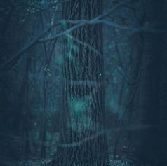 "Nicolas Sasbon, ""Into the Woods"""