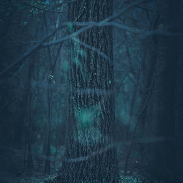 Nicolás Sasbón, del álbum Dark mood