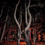 """Silvana Elizabeth Stea, """"Juguemos en el bosque"""""""