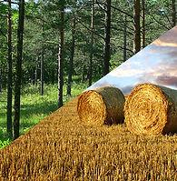 Land forst.jpg