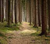 forestry-679173.jpg