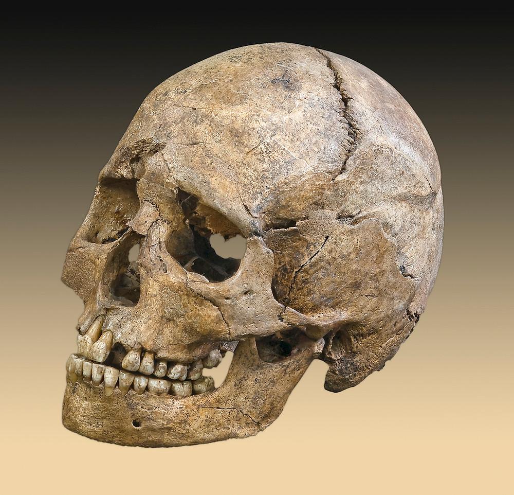 Les traces d'homininé découvertes aux Philippines sont-celles d'un Homo sapiens ? (Photo : Didier Descouens - CC BY-SA 4.0)