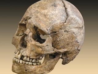 Un mystérieux ancêtre mangeait du rhinocéros il y a 700 000 ans
