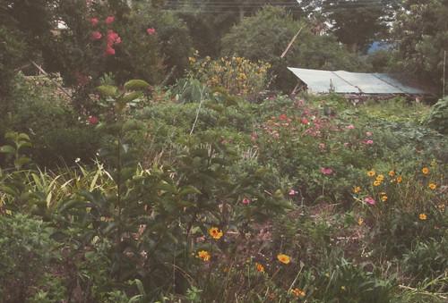 おばあちゃんの幸せそうな庭